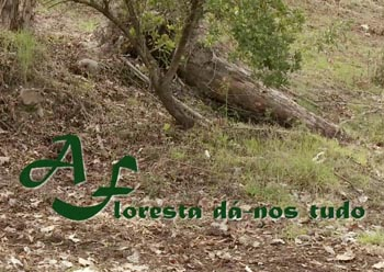 "fLORESTA UNIDA – ""THE FOREST GIVES US EVERYTHING"""