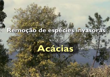 "Floresta unida –  ""CLEARANCE OF INVASIVE SPECIES, ACACIAS """
