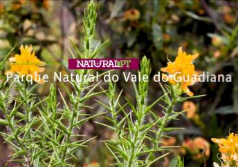 Natural.pt  – Rio Guadiana
